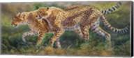 March Of The Cheetahs Fine-Art Print