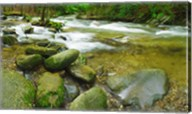 Stream following through a forest, Little River, Great Smoky Mountains National Park, Tennessee, USA Fine-Art Print