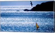 Windsurfer in the sea, Sint Maarten, Netherlands Antilles Fine-Art Print