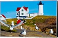 Seagulls at Nubble Lighthouse, Cape Neddick, York, Maine, USA Fine-Art Print