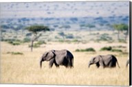 African elephants (Loxodonta africana) walking in plains, Masai Mara National Reserve, Kenya Fine-Art Print