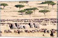 Wildebeests with African elephants (Loxodonta africana) in a field, Masai Mara National Reserve, Kenya Fine-Art Print