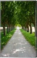 Treelined along a road, Vaugines, Vaucluse, Provence-Alpes-Cote d'Azur, France Fine-Art Print