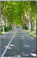 Allee of trees, St.-Remy-De-Provence, Bouches-Du-Rhone, Provence-Alpes-Cote d'Azur, France Fine-Art Print