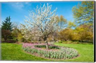 Tree in Sherwood Gardens, Baltimore, Maryland Fine-Art Print