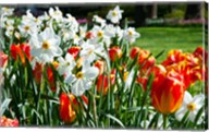Tulips and other flowers at Sherwood Gardens, Baltimore, Maryland, USA Fine-Art Print