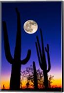 Moon over Saguaro cactus (Carnegiea gigantea), Tucson, Pima County, Arizona, USA Fine-Art Print
