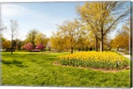 Flowers with trees at Sherwood Gardens, Baltimore, Maryland, USA Fine-Art Print