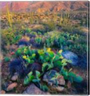 Prickly pear and saguaro cacti, Santa Catalina Mountains, Oro Valley, Arizona, USA Fine-Art Print