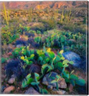 Prickly pear and saguaro cacti, Santa Catalina Mountains, Oro Valley, Arizona, USA Fine-Art Print