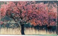 Me and My Tree Fine-Art Print