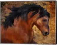 Wild Horse Fine-Art Print