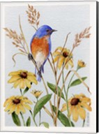 Bluebird And Blackeyed Susans Fine-Art Print