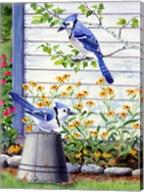 Bluejays Fine-Art Print
