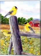 Goldfinch Fine-Art Print