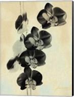 Orchid Blush Panels III Fine-Art Print