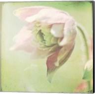 Pastel Paths XII Fine-Art Print