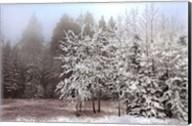 Frosty Morning Fine-Art Print