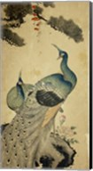 Korean Peacocks Fine-Art Print