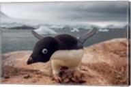 Adelie penguin, Western Antarctic Peninsula Fine-Art Print