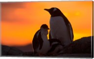 Gentoo Penguins Silhouetted at Sunset on Petermann Island, Antarctic Peninsula Fine-Art Print