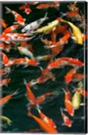 China, Hong Kong, Kowloon, Koi carp in Nan Lian Garden Fine-Art Print