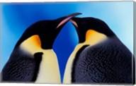 Emperor Penguin Pair, Antarctica Fine-Art Print