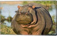 Hippopotamus, Tanzania Fine-Art Print