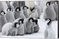 Emperor Penguins on ice, Snow Hill Island, Antarctica Fine-Art Print