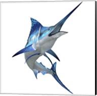 Blue Marlin Fine-Art Print
