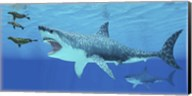 Seals race to get away from a giant Megalodon shark Fine-Art Print