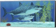 Two Megalodon sharks from the Cenozoic Era Fine-Art Print