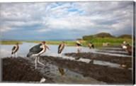 Marabou Storks, fish market in Awasa, Ethiopia Fine-Art Print