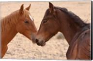 Namibia, Garub. Pair of feral horses Fine-Art Print