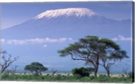 Mount Kilimanjaro, Amboseli National Park, Kenya Fine-Art Print