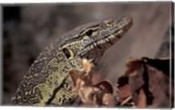 Nile Monitor Lizard, Gombe National Park, Tanzania Fine-Art Print