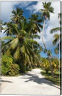 Seychelles, La Digue, Palm lined country path Fine-Art Print