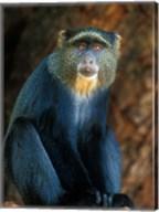 Tanzania, Lake Manyara NP, Blue Monkey Fine-Art Print