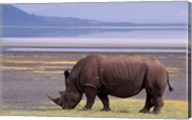 White Rhinoceros, Lake Nakuru National Park, Kenya Fine-Art Print