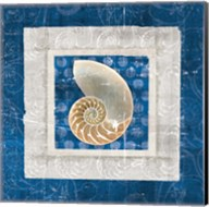 Sea Shell II on Blue Fine-Art Print