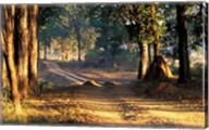 Rural Road, Kanha National Park, India Fine-Art Print