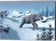 Two large mammoths walking slowly on the snowy mountain Fine-Art Print