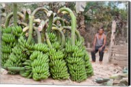 India, Meghalaya, Bajengdoba, Bananas and the man who picked them Fine-Art Print