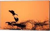 Painted Stork against a sunset sky, India Fine-Art Print