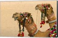 Decorated Camel in the Thar Desert, Jaisalmer, Rajasthan, India Fine-Art Print