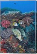 Scene of fish and coral Fine-Art Print