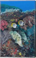 Scene of fish and coral Fine-Art Print