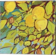 The Lemons Above Fine-Art Print