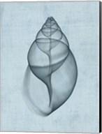 Achatina Shell (light blue) Fine-Art Print