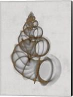 Wentletrap Shell Fine-Art Print